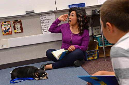 Diego's Dudes lunchtime reading club at Felton Elementary School in Lennox. Fourth grade teacher Alex Carrera brings her Chihuahua Diego to class as a mascot to help boys improve reading skills. (Brad Graverson / Staff Photographer)